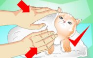 How to Give a Cat a Bath - Do Cats Need Baths