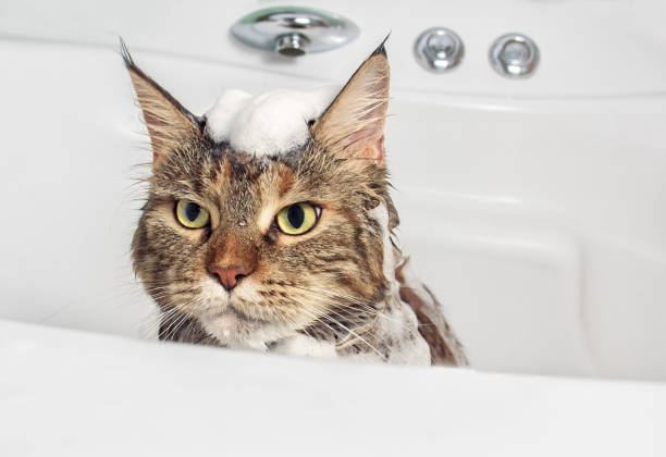 Why Are Cats Afraid of Water? The Answer is No - Here's What You Need to Know