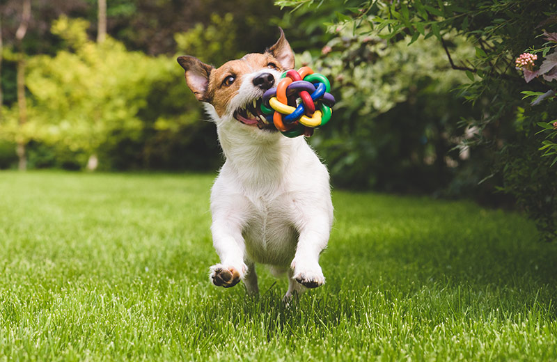 Your Dog Possessive of Toys - A Few Ways to Help With Training