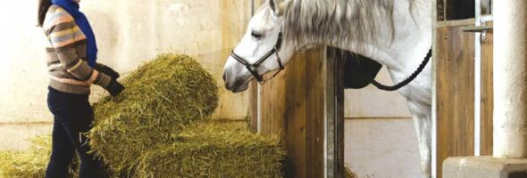 Equine Nutrition - What Your Horse Needs